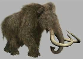 20080102124816-tiempo-mamut-lanudo.jpg